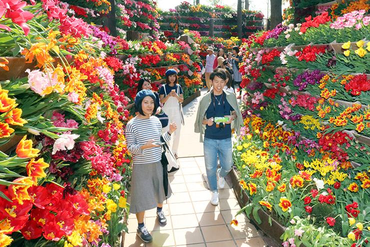 昨年のとなみチューリップフェアで人気を集めた「花の大谷」
