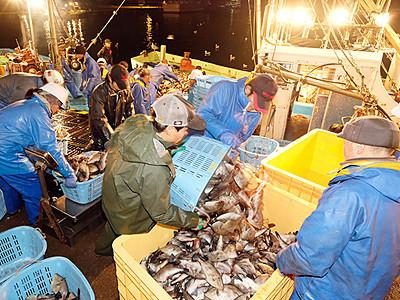 魚津寒ハギ漁が最盛期 「如月王」に高値