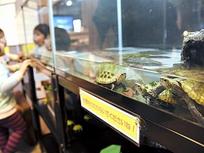 亀観察、環境考えるきっかけに 固有種など5種、大野市