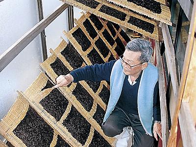 漂う磯の香り 志賀・福浦港で岩ノリ採りピーク