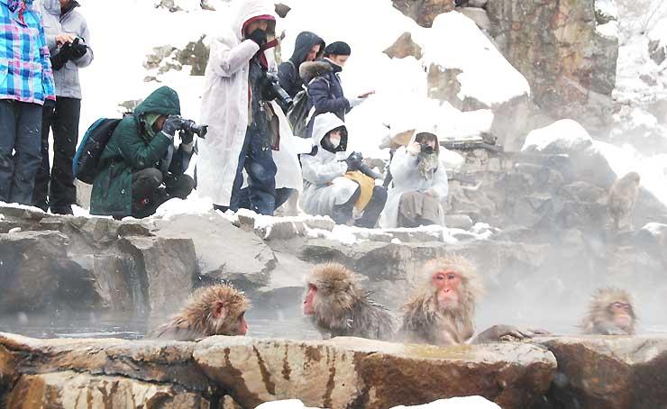 温泉に漬かる猿を撮影しようとカメラを向ける観光客たち