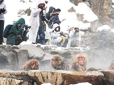 スノーモンキー、寒空でも温か 山ノ内で観光客も撮影に熱