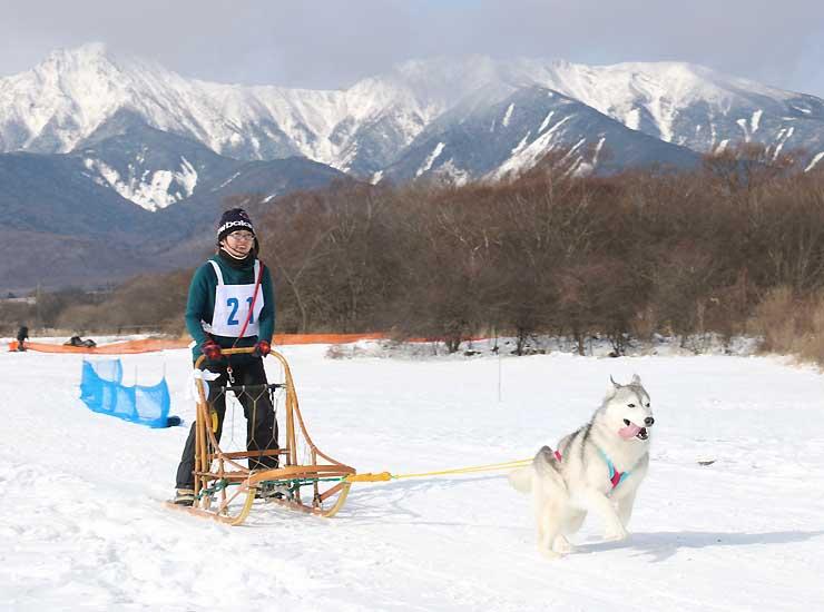 雪をかぶった八ケ岳を背に、雪原で犬ぞりレースを楽しむ参加者