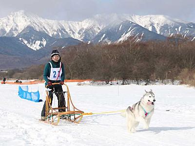 野辺山高原の極寒楽しむ 犬ぞりや雪上サイクリングで