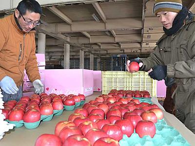 ピンクレディー「一番良い出来」 安曇野で選果作業