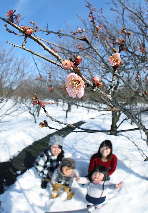 陽気に誘われて咲いた梅の花=県中央植物園(写真部部長デスク・垣地信治)