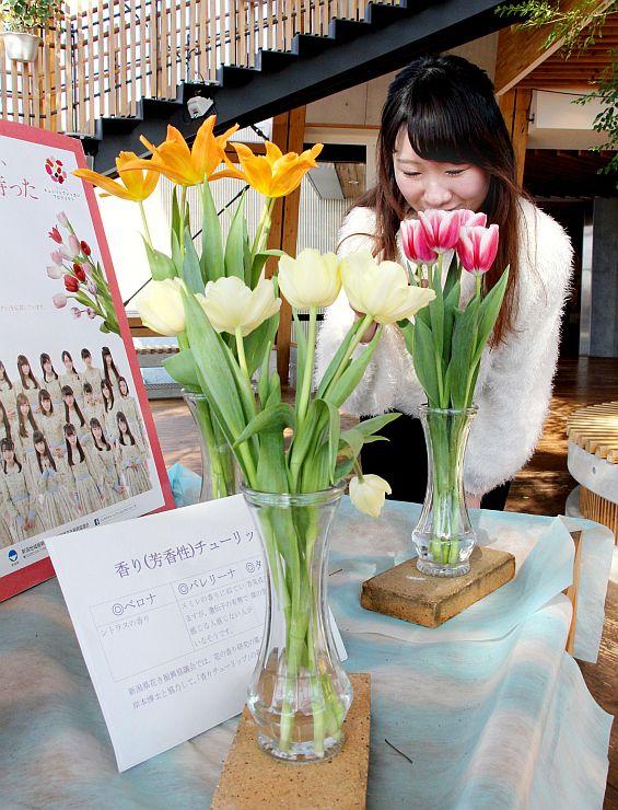 豊かな香りが特徴の県産チューリップ3種類=2日、新潟市中央区