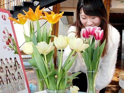 香り豊か県産身近に チューリップ展示会 新潟