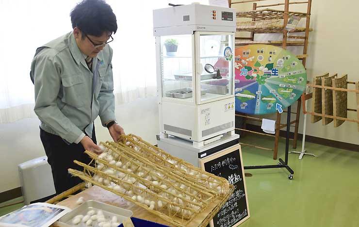 蚕の品種「小石丸」を飼育する「カイコふれあいルーム」。美智子さまが養蚕の際に使われる物と同じ藁蔟を常設展示している