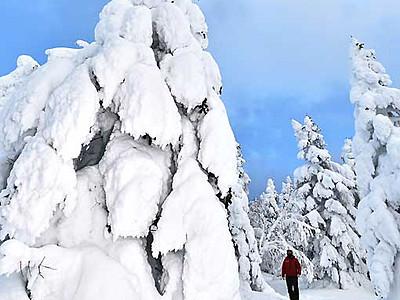 樹氷、まるで「モンスター」 上田・須坂市境の根子岳山頂