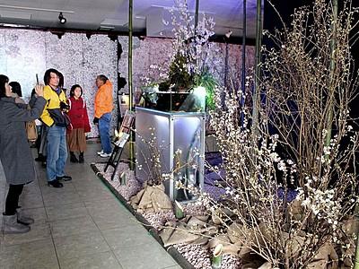 冬桜気分晴れ晴れ 恒例の花イベント 阿賀野