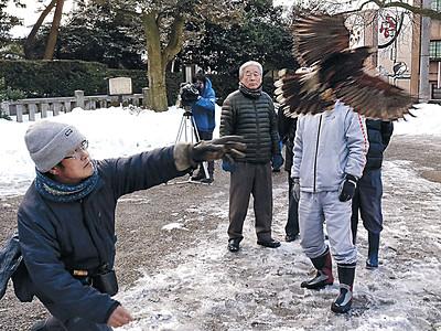 能登初、タカでカラス撃退 羽咋神社周辺、鷹匠の吉田さん協力
