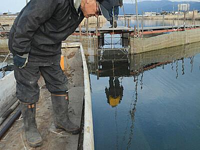 ワカサギ採卵へ 諏訪湖で捕獲作業始まる