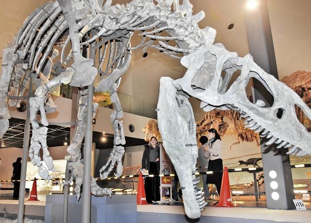 組み上げ作業が終わったアロサウルスの実物全身骨格=福井県勝山市の県立恐竜博物館
