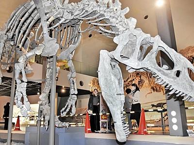大迫力アロサウルス「出現」 勝山・県立恐竜博物館