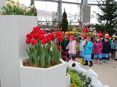 春の先陣色鮮やか チューリップ展 新潟県立植物園