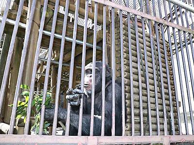 公園遊具で動物本来の姿を 長野・茶臼山動物園に設置