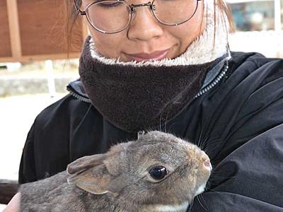 控えめウサギ「パンジー」1位 須坂市動物園の代表選挙