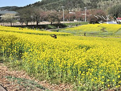 バスでゆったり楽しむルート増 飯山の春の観光