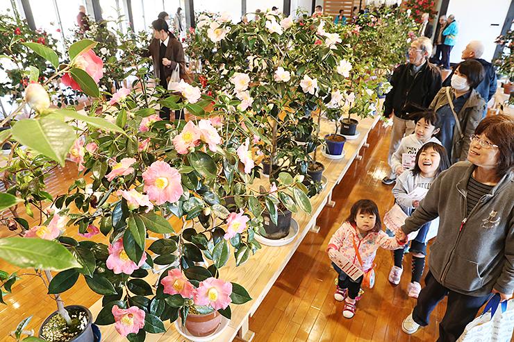 咲き競う鮮やかなツバキに見入る来場者=いのくち椿館