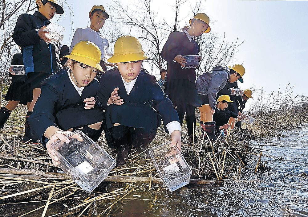 ヤマメの稚魚を放流する児童=26日午前9時50分、金沢市の犀川橋付近