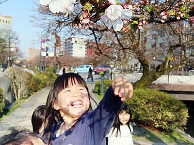 県内で桜開花宣言 史上2番目の早さ