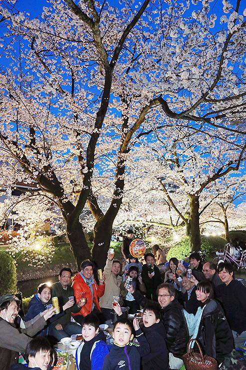 満開の夜桜の下、盛り上がる花見客=富山城址公園(写真部長・佐藤範幸)