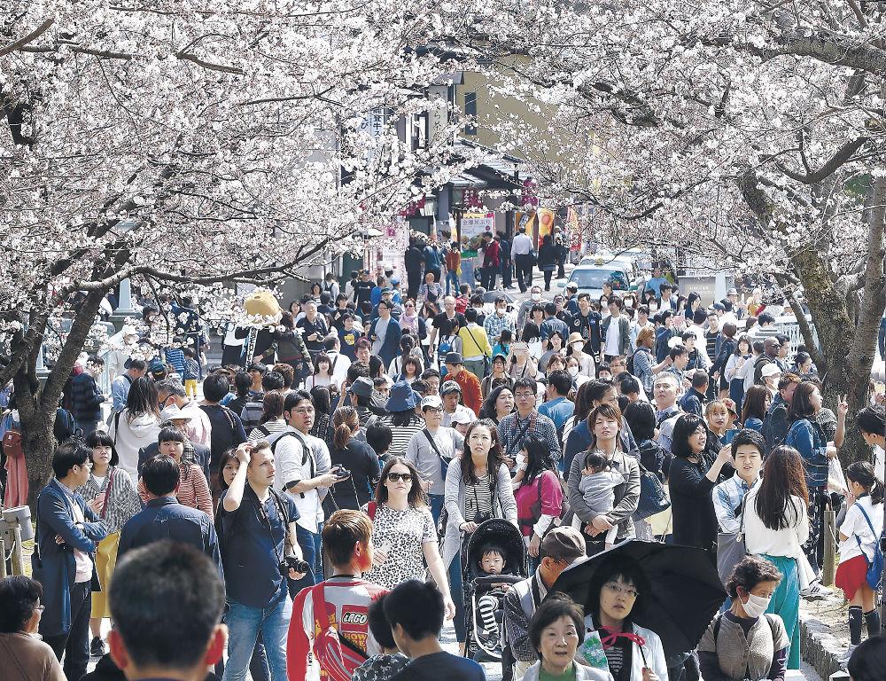 見頃が間近に迫った桜を眺めながら散策を楽しむ市民や観光客=兼六園周辺