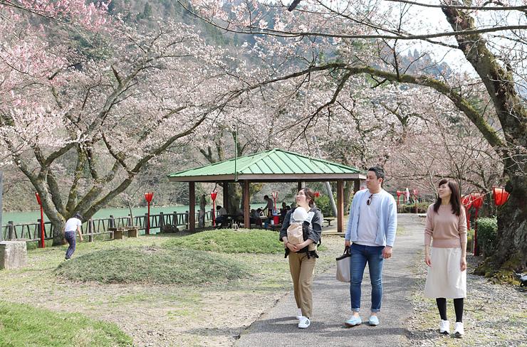 庄川べりの花見を楽しむ人たち=砺波市の庄川水記念公園