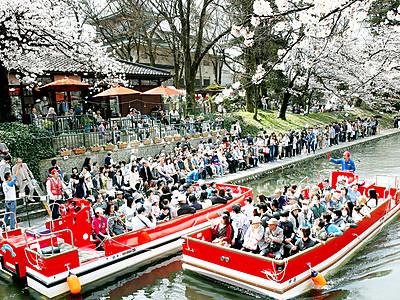 船上から花見満喫 富山・松川