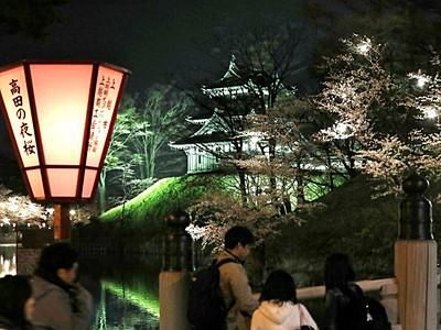 高田の夜桜心も照らす 上越