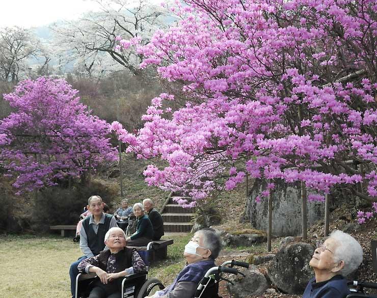 ミツバツツジが咲き始め、周囲の桜との共演が楽しめる南木曽町の天白公園=2日
