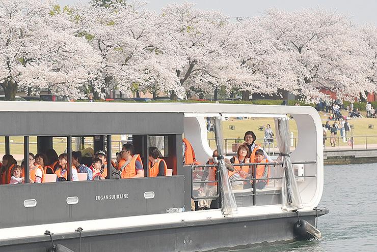 満開の桜を眺める乗船客