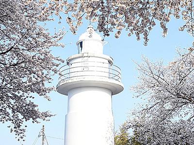 桜と海越しの立山楽しんで! 高岡・国分の灯台8日公開