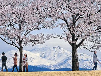 白山に桜の冠 「清明」の5日、県内肌寒く