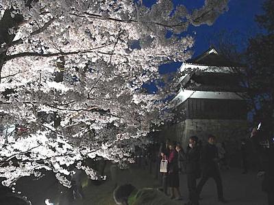 千本桜、闇夜に浮かぶ 上田城跡公園