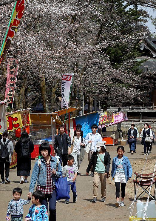 桜まつりが始まり、花見を楽しむ人たち=6日、長岡市御山町の悠久山公園