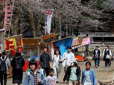 春本番足取り軽やか 長岡・悠久山公園で桜まつり始まる