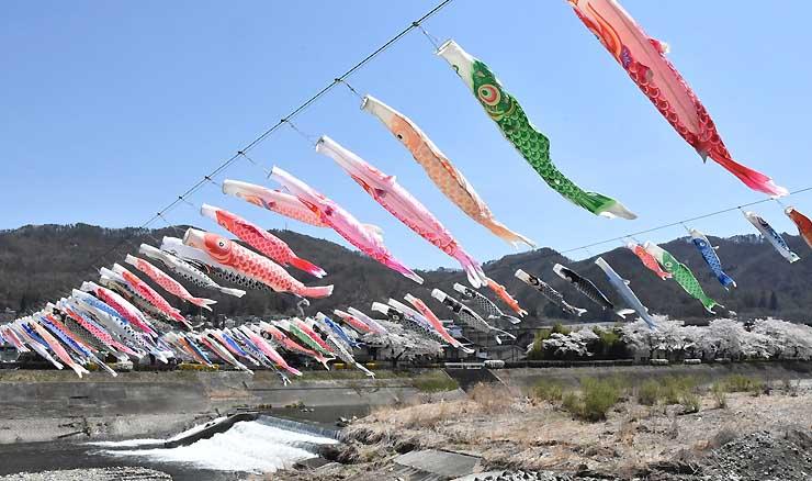 依田川の上で風になびく約100匹のこいのぼり
