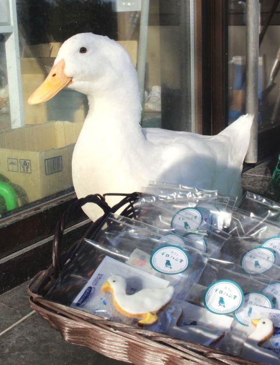 アヒルのガーコとクッキー=新潟市西蒲区