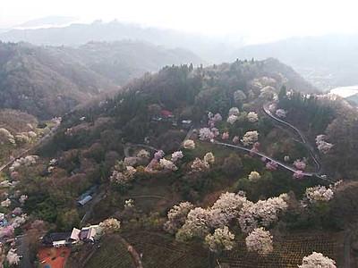 ヤマザクラ、春の点描 池田・陸郷一帯