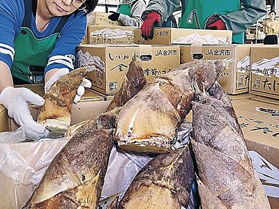 金沢産タケノコの出荷始まる 表年、味よし量よし
