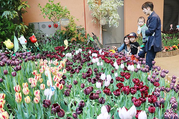 珍しい黒色のチューリップなど多彩な品種が並ぶ会場=チューリップ四季彩館