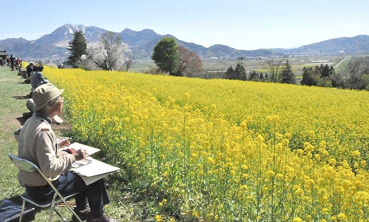 見頃になると菜の花が一面に広がる飯山市の菜の花公園=2017年5月
