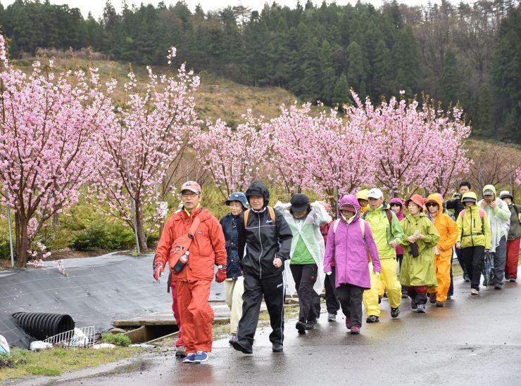 開設された公認コースを歩く市民ら=15日、長岡市黒坂
