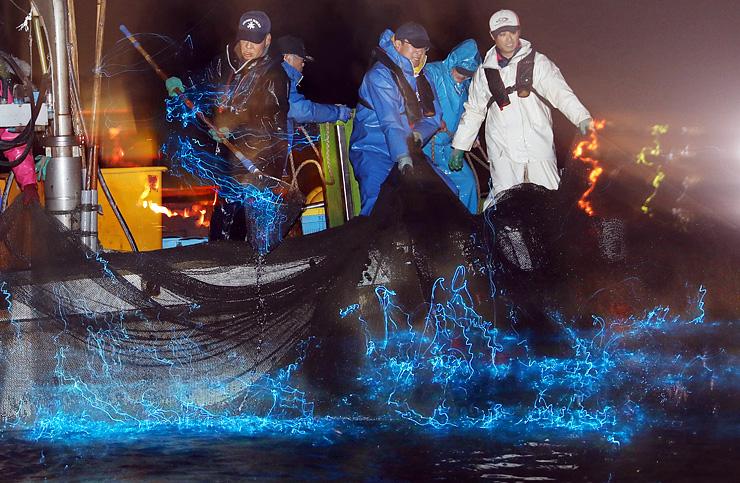 網に掛かり青白い光を放つホタルイカ=18日午前3時35分ごろ、滑川市沖