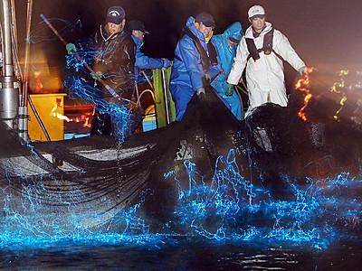 神秘の光躍る 滑川でホタルイカ漁最盛期