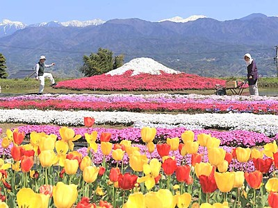 シバザクラ、南ア背景に富士山 高森の夫妻、集大成の美