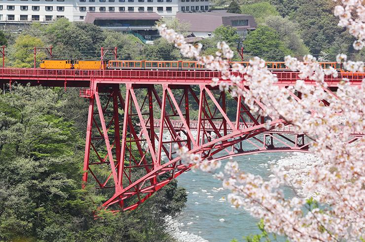 桜がまだ咲く黒部峡谷の新山彦橋を渡るトロッコ電車=黒部市宇奈月町音澤(写真部部長デスク・垣地信治)