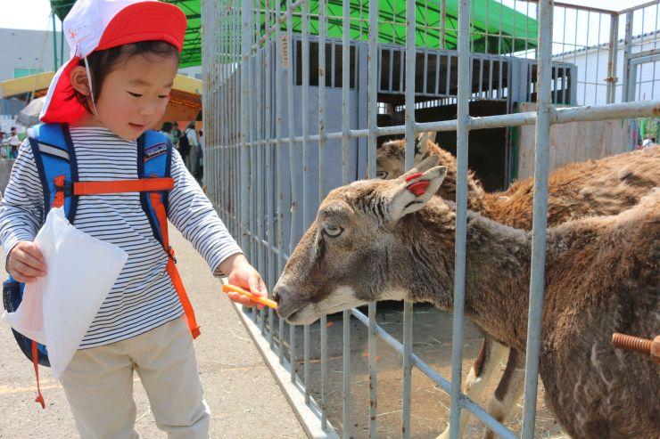 動物への餌やり体験を楽しむ子ども=21日、上越市